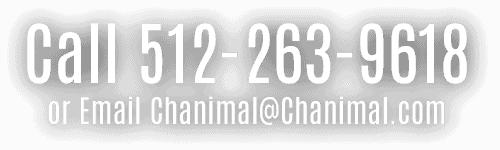 Chanimal Phone Number